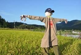 稲を育てる図1