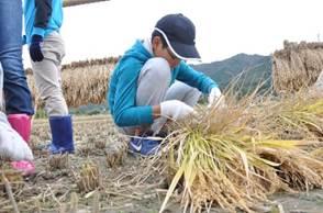 稲を育てる 図2